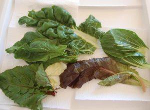 Blätter von Rote Bete, Spinat, Mango, Kohl und Salat