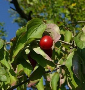 Vitaminschub durch essbare Wildpflanzen
