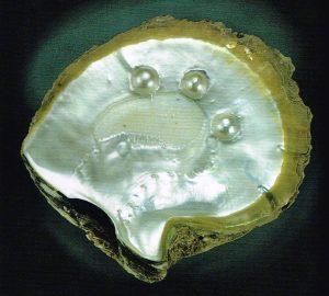 Muschel mit Perlen