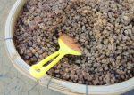 fermentierte-Sojabohnen-©nunawwoofy-fotolia