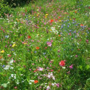 Mit pflanzlichen Antibiotika gut durch den Winter
