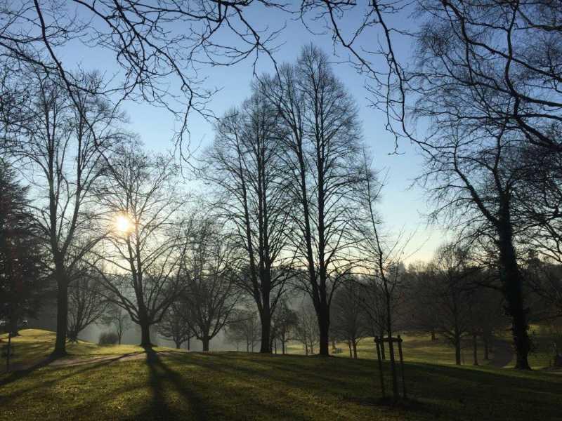 Mythische Bäume: Kulte, Sagen, Heilwissen, Handwerk