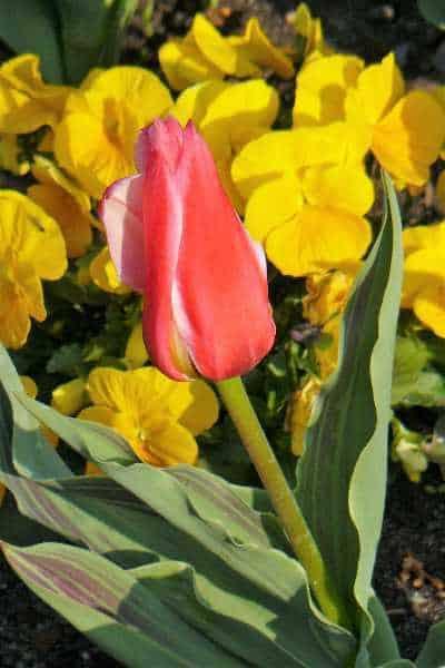 Frühlingsfit statt Frühjahrsmüde